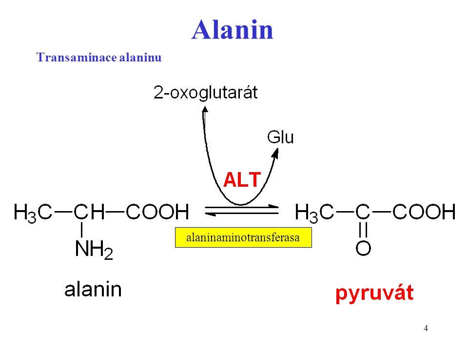 alaninaminotransferasa