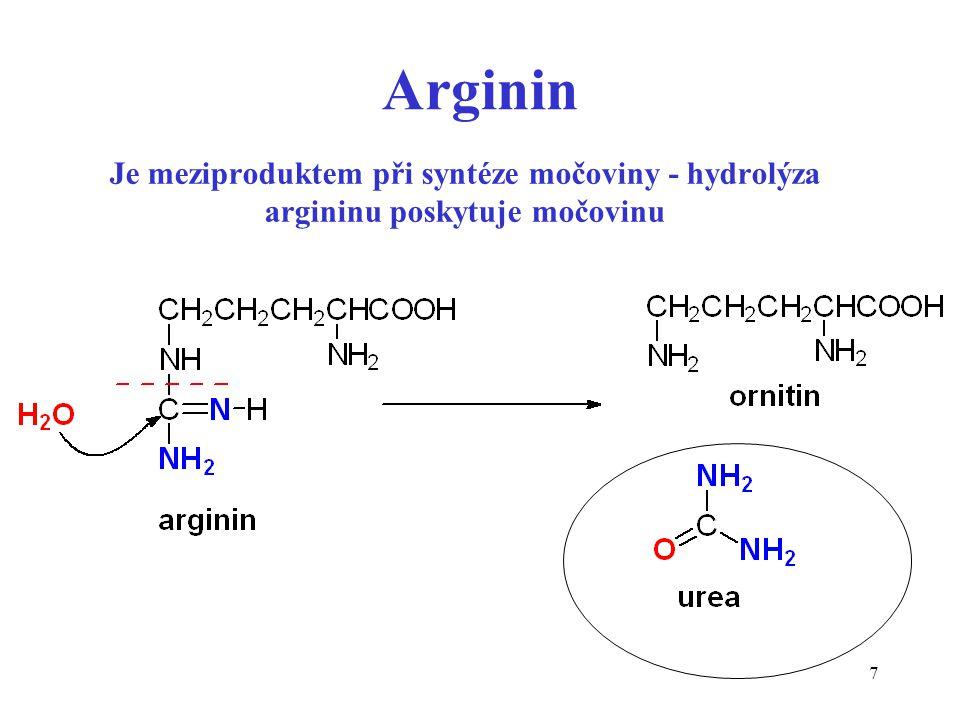 Arginin Je meziproduktem při syntéze močoviny - hydrolýza argininu poskytuje močovinu