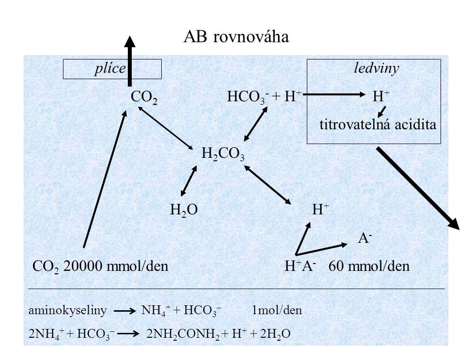 AB rovnováha plíce ledviny CO2 HCO3- + H+ H+ titrovatelná acidita