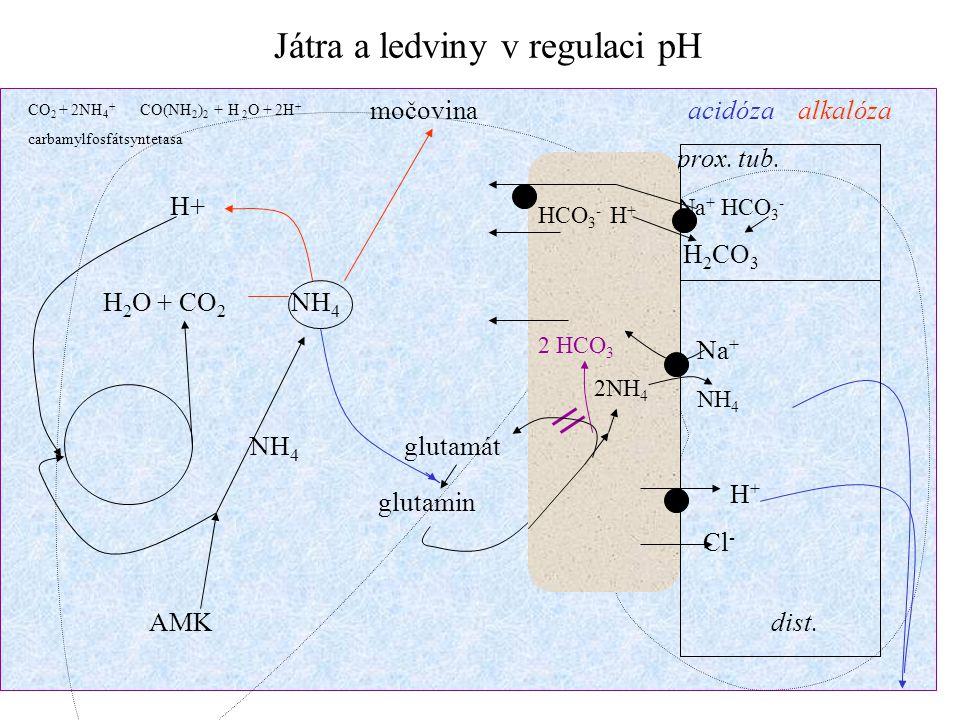 Játra a ledviny v regulaci pH