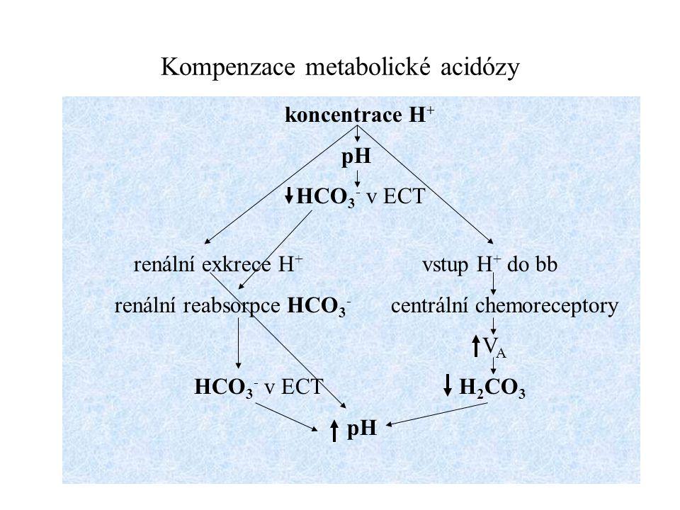 Kompenzace metabolické acidózy