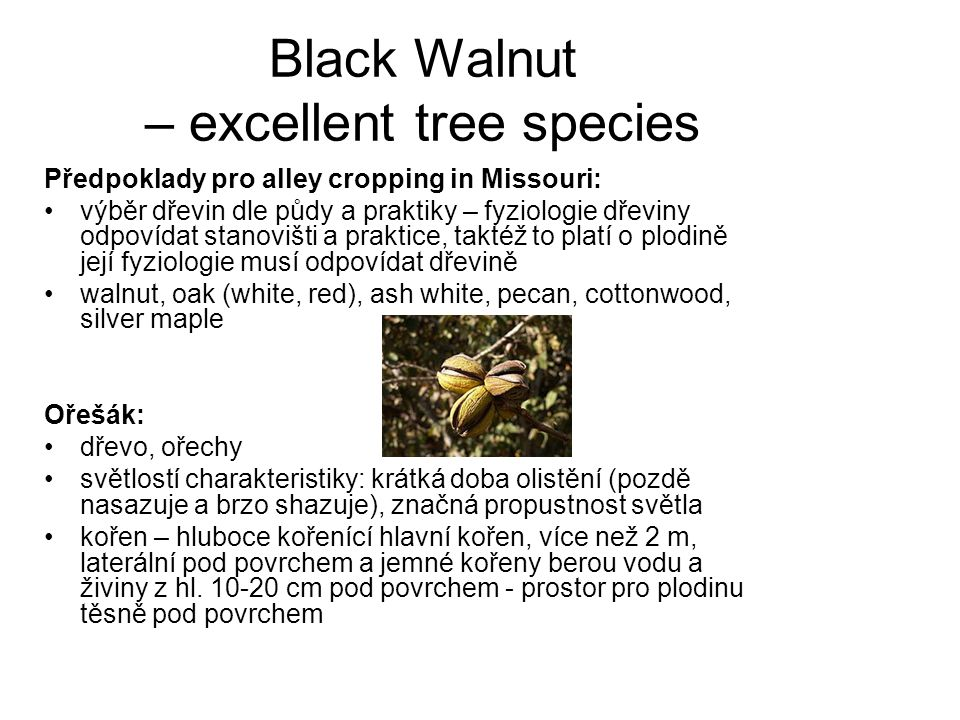 Black Walnut – excellent tree species