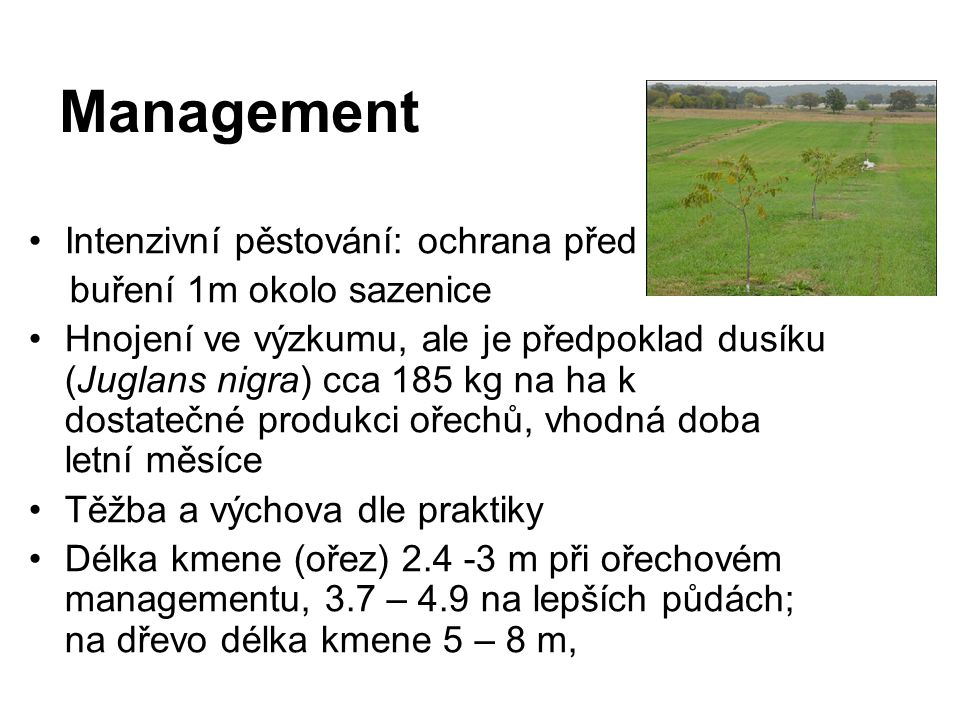 Management Intenzivní pěstování: ochrana před buření 1m okolo sazenice