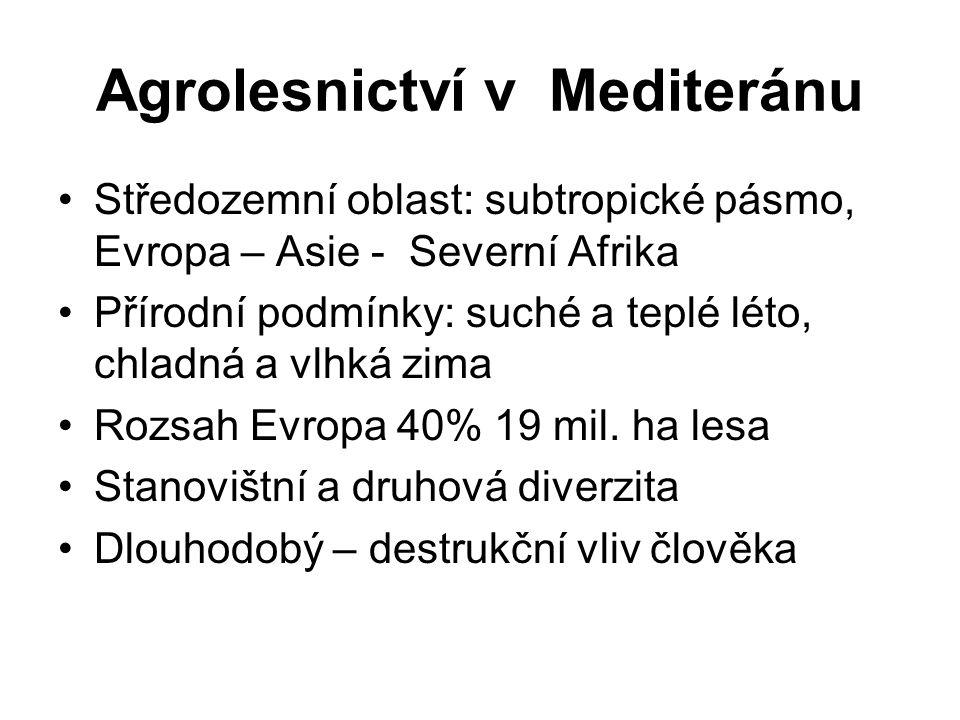 Agrolesnictví v Mediteránu