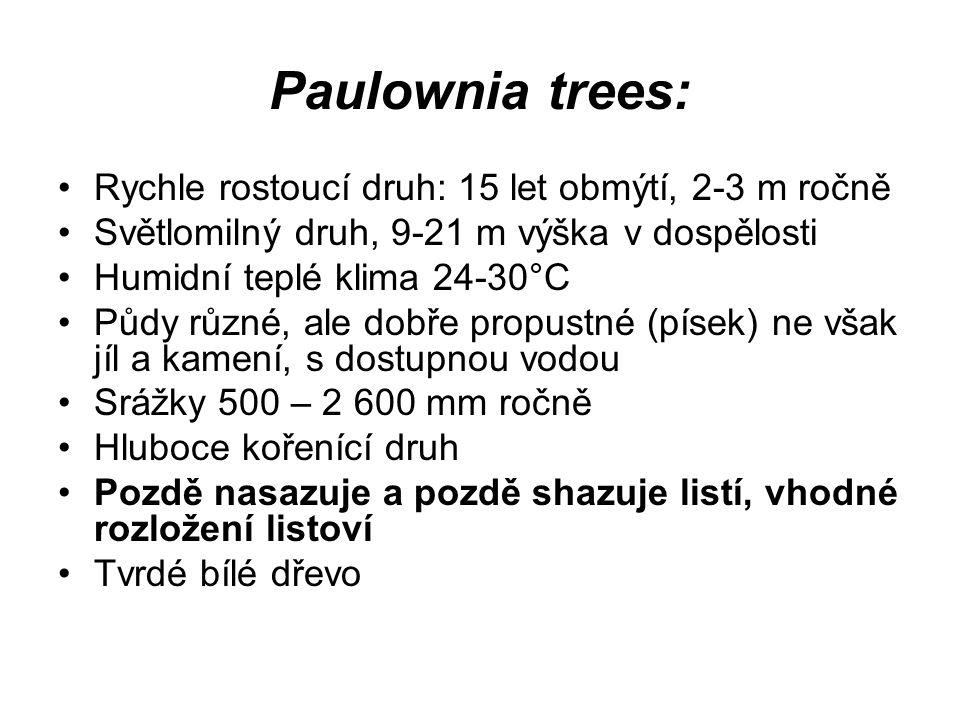Paulownia trees: Rychle rostoucí druh: 15 let obmýtí, 2-3 m ročně