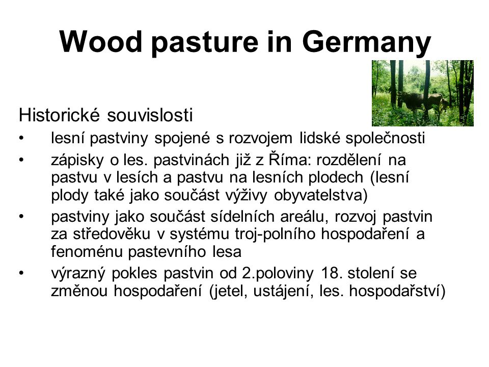 Wood pasture in Germany
