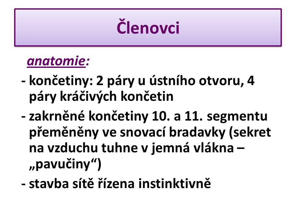 Členovci anatomie: - končetiny: 2 páry u ústního otvoru, 4 páry kráčivých končetin.