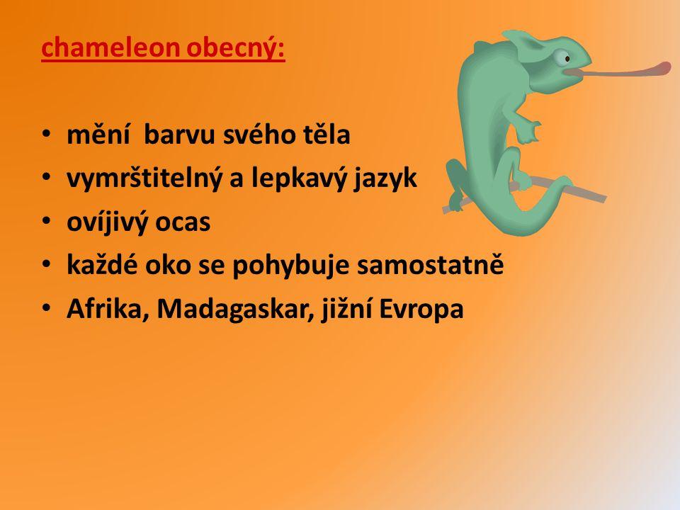 chameleon obecný: mění barvu svého těla. vymrštitelný a lepkavý jazyk. ovíjivý ocas. každé oko se pohybuje samostatně.