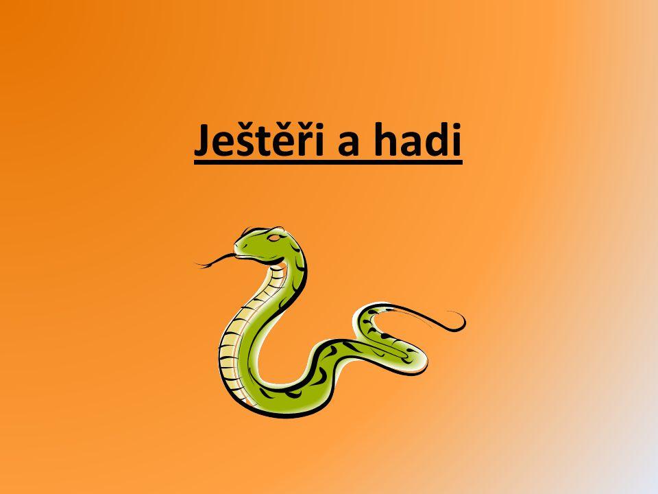Ještěři a hadi