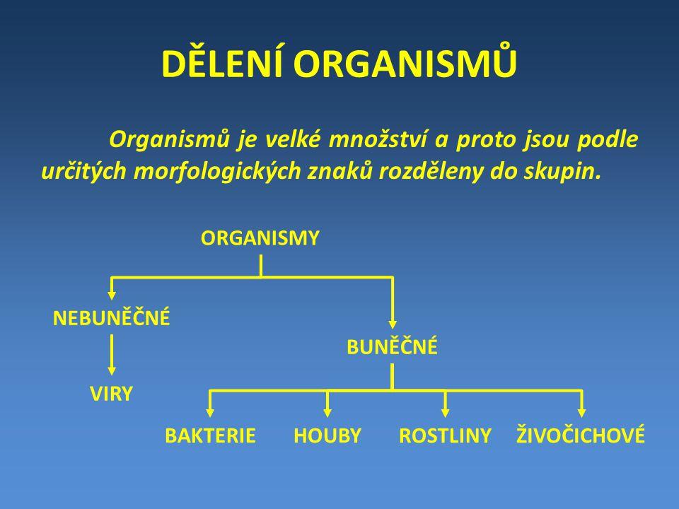 DĚLENÍ ORGANISMŮ Organismů je velké množství a proto jsou podle určitých morfologických znaků rozděleny do skupin.