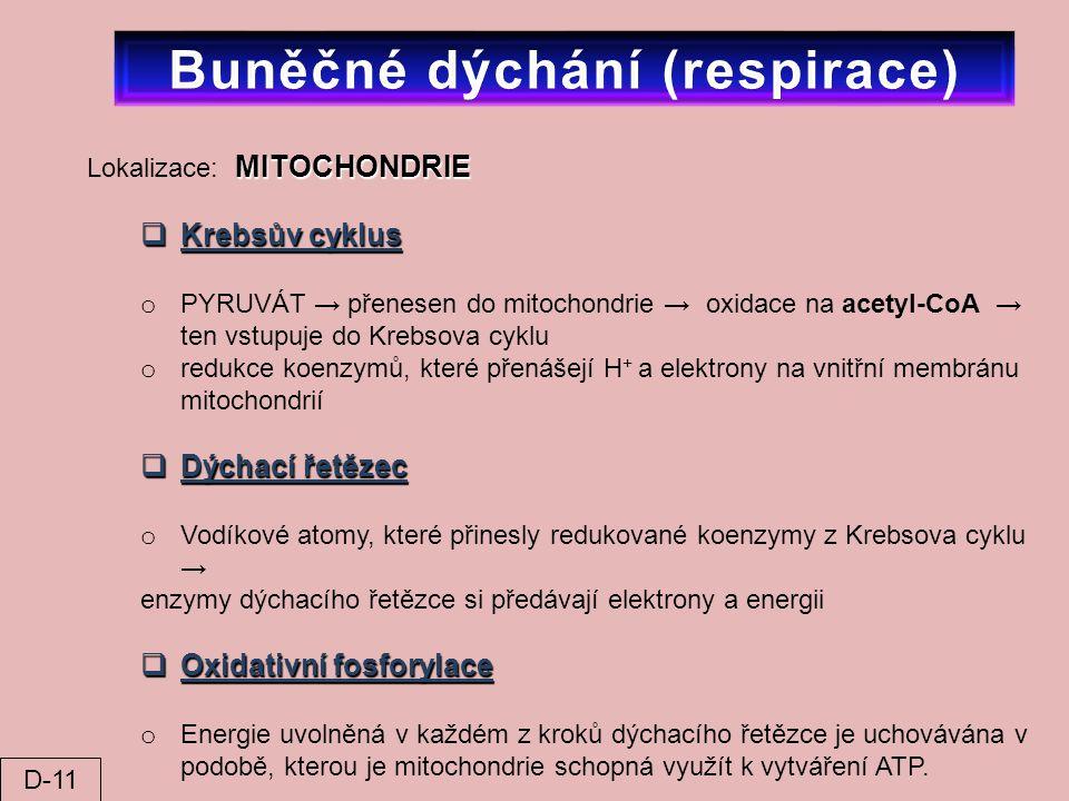 Buněčné dýchání (respirace)