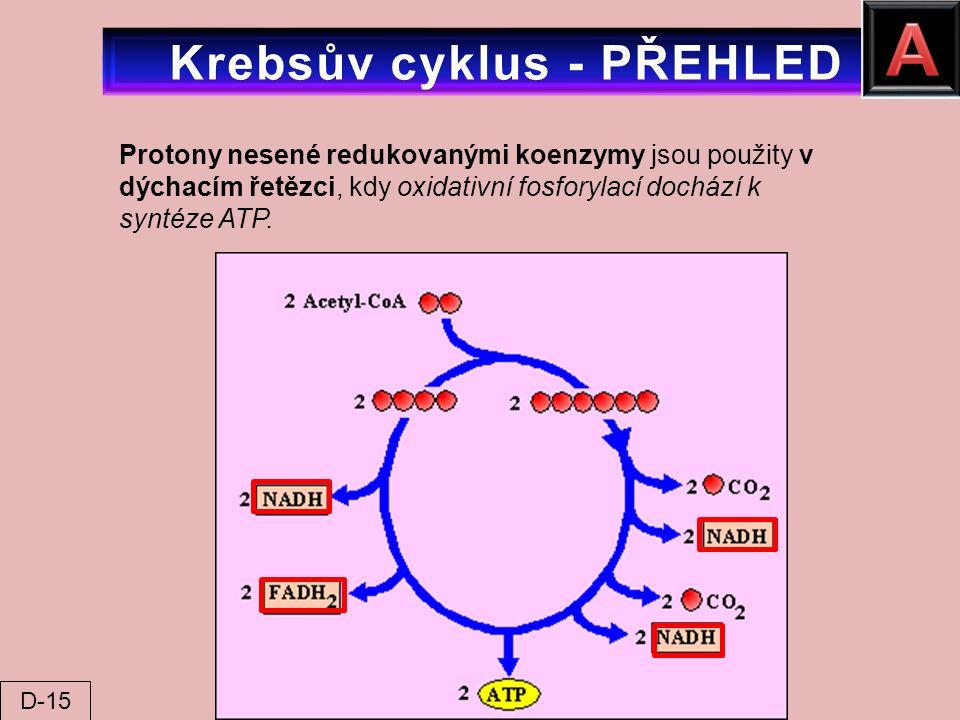 Krebsův cyklus - PŘEHLED
