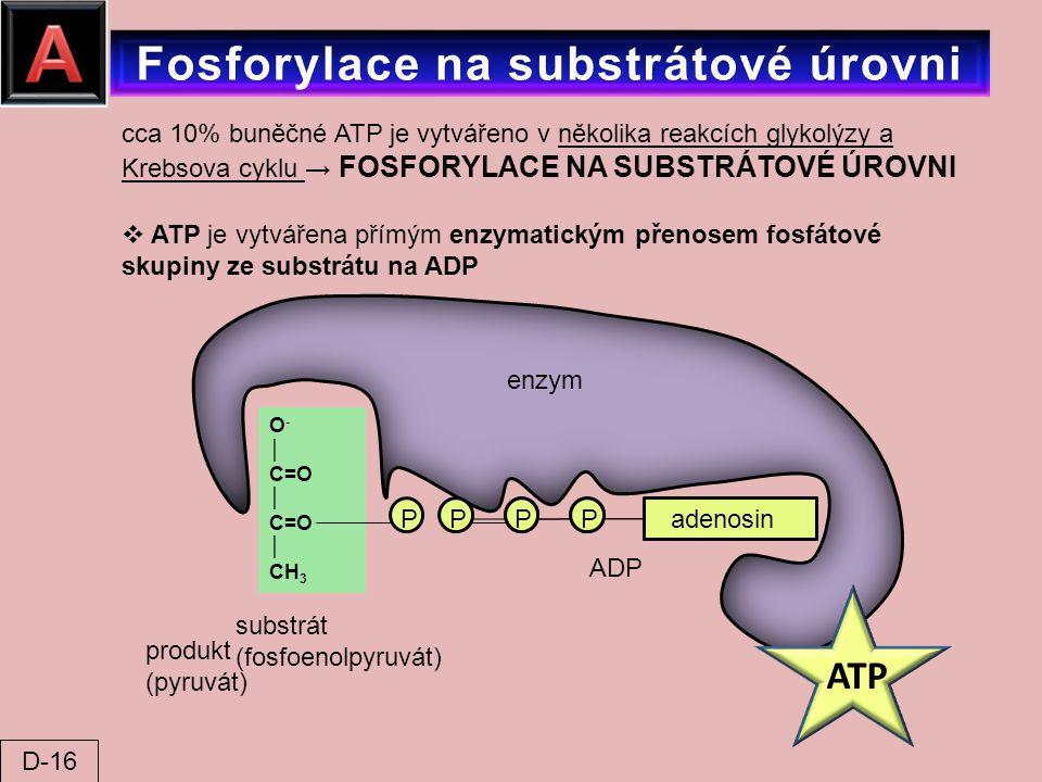 Fosforylace na substrátové úrovni