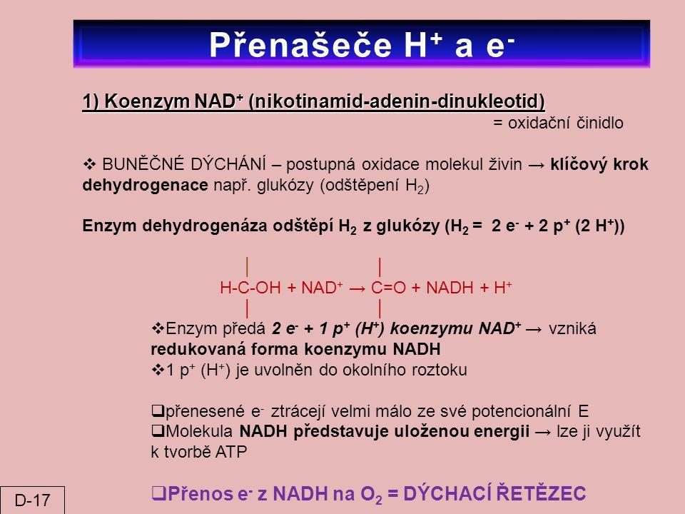 Přenašeče H+ a e- 1) Koenzym NAD+ (nikotinamid-adenin-dinukleotid)
