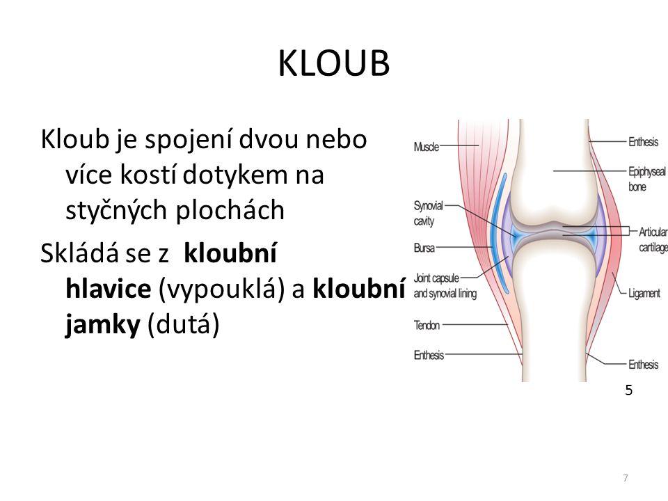 KLOUB Kloub je spojení dvou nebo více kostí dotykem na styčných plochách. Skládá se z kloubní hlavice (vypouklá) a kloubní jamky (dutá)