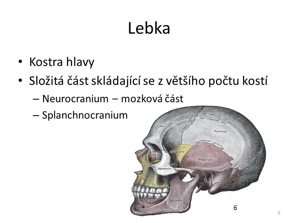 Lebka Kostra hlavy Složitá část skládající se z většího počtu kostí