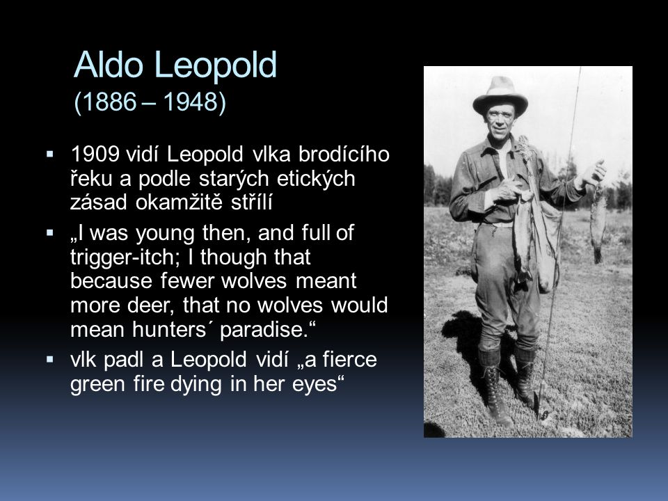 Aldo Leopold (1886 – 1948) 1909 vidí Leopold vlka brodícího řeku a podle starých etických zásad okamžitě střílí.