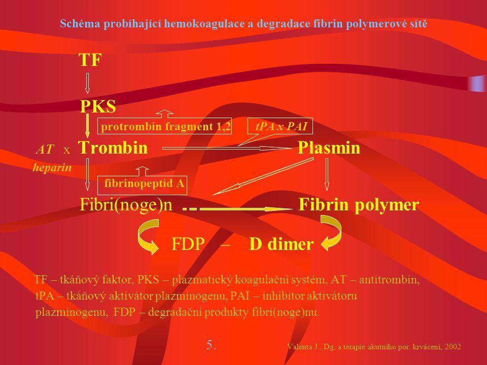 Schéma probíhající hemokoagulace a degradace fibrin polymerové sítě