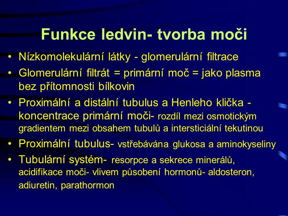Funkce ledvin- tvorba moči