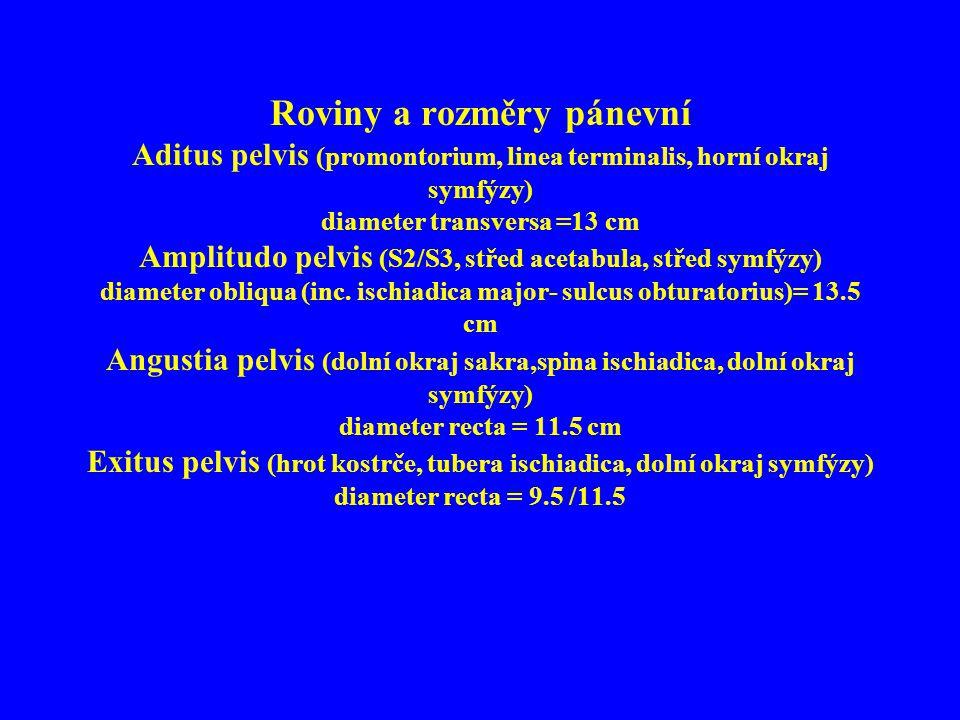 Roviny a rozměry pánevní Aditus pelvis (promontorium, linea terminalis, horní okraj symfýzy) diameter transversa =13 cm Amplitudo pelvis (S2/S3, střed acetabula, střed symfýzy) diameter obliqua (inc.