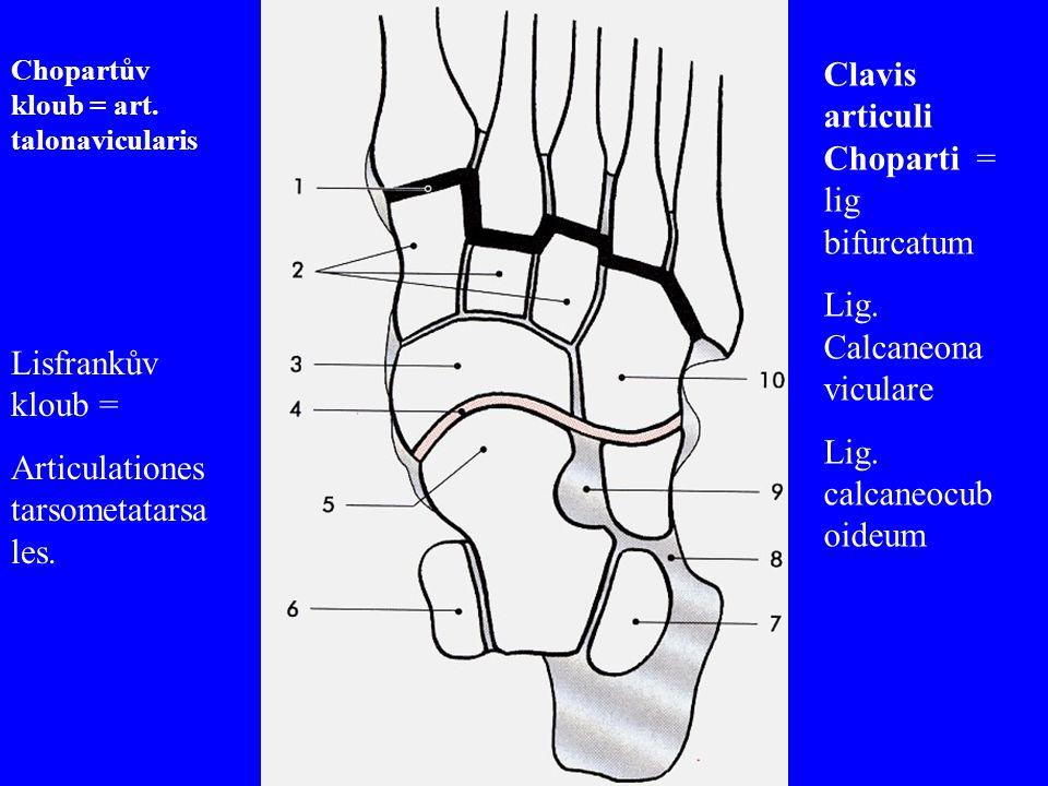 Clavis articuli Choparti = lig bifurcatum