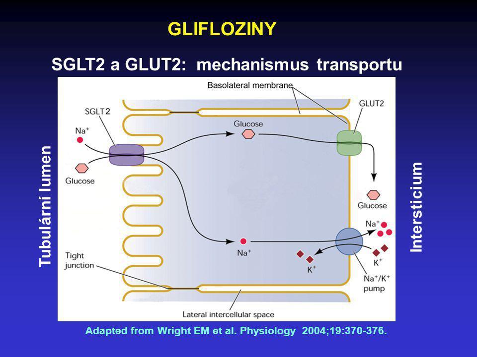 SGLT2 a GLUT2: mechanismus transportu