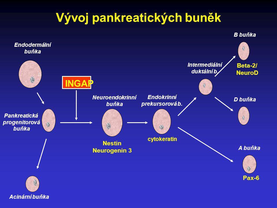 Vývoj pankreatických buněk