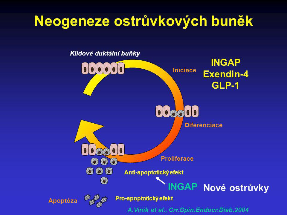 Neogeneze ostrůvkových buněk