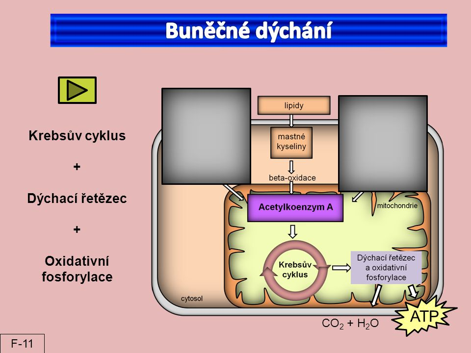 Oxidativní fosforylace