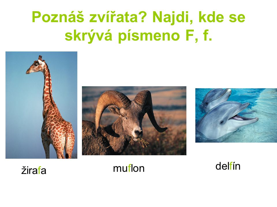 Poznáš zvířata Najdi, kde se skrývá písmeno F, f.