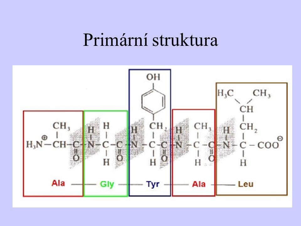 Primární struktura