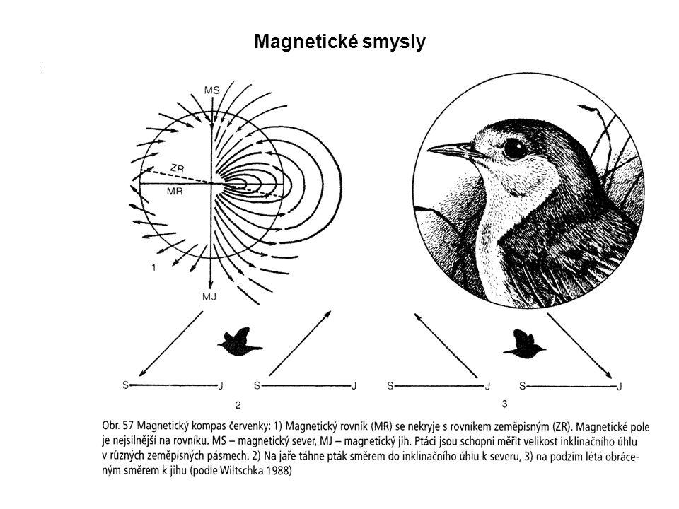 Magnetické smysly I