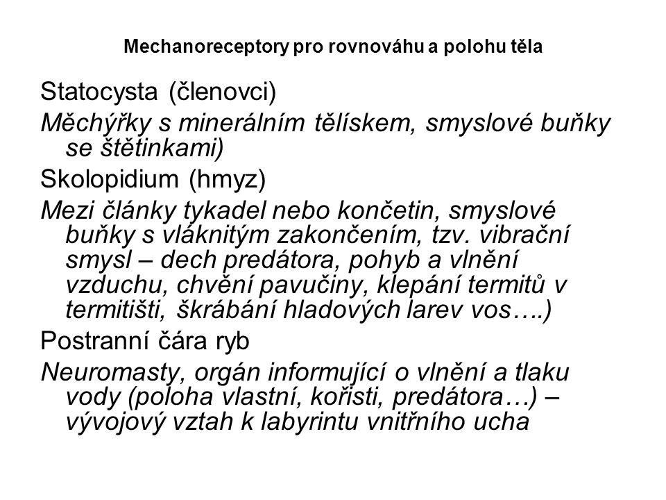 Mechanoreceptory pro rovnováhu a polohu těla