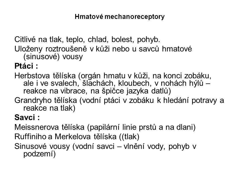 Hmatové mechanoreceptory