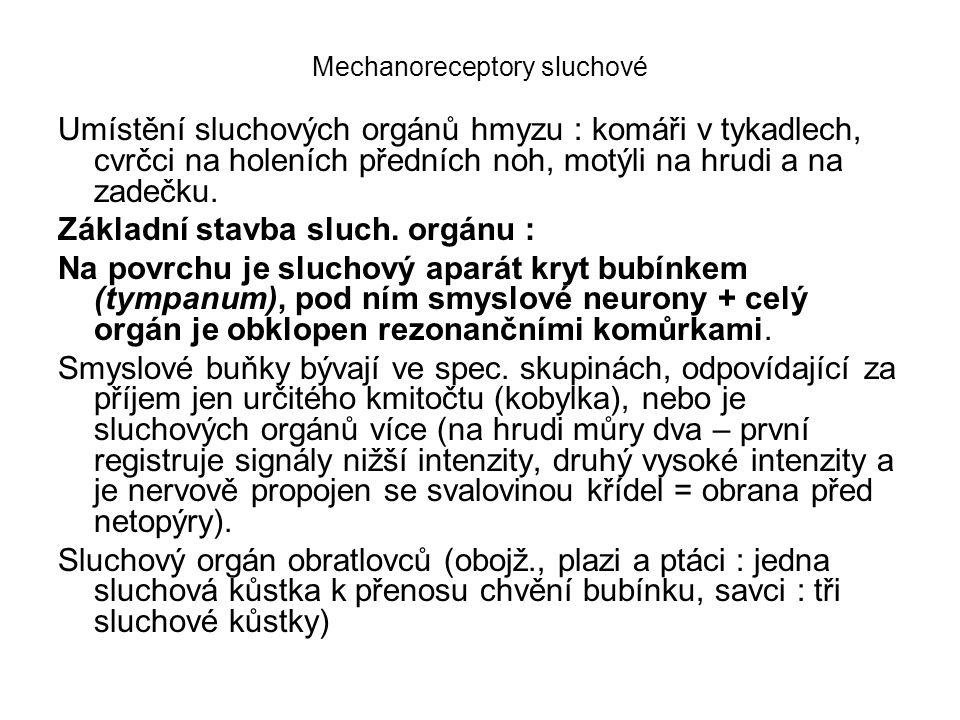 Mechanoreceptory sluchové