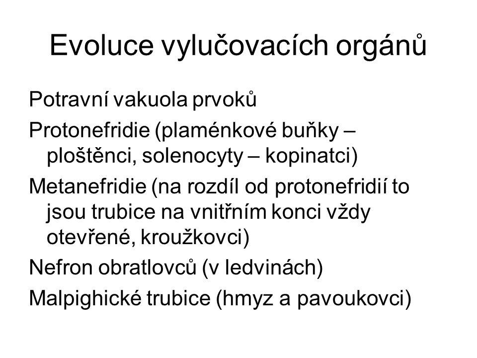 Evoluce vylučovacích orgánů