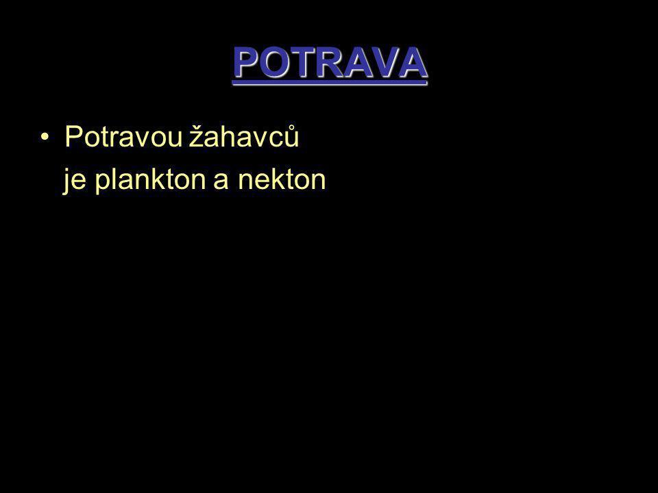 POTRAVA Potravou žahavců je plankton a nekton