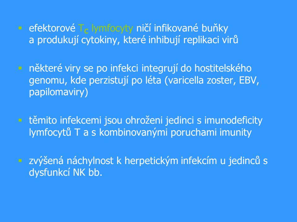 efektorové TC lymfocyty ničí infikované buňky a produkují cytokiny, které inhibují replikaci virů
