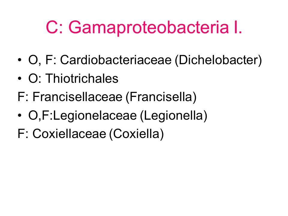 C: Gamaproteobacteria I.