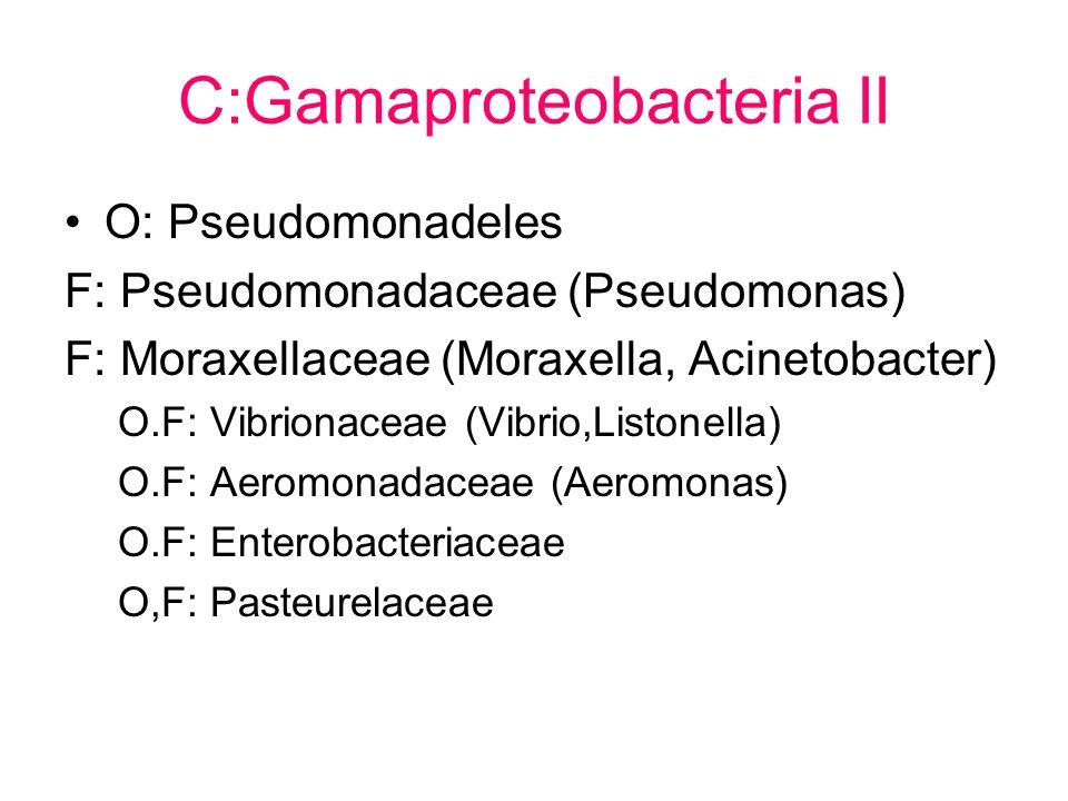 C:Gamaproteobacteria II