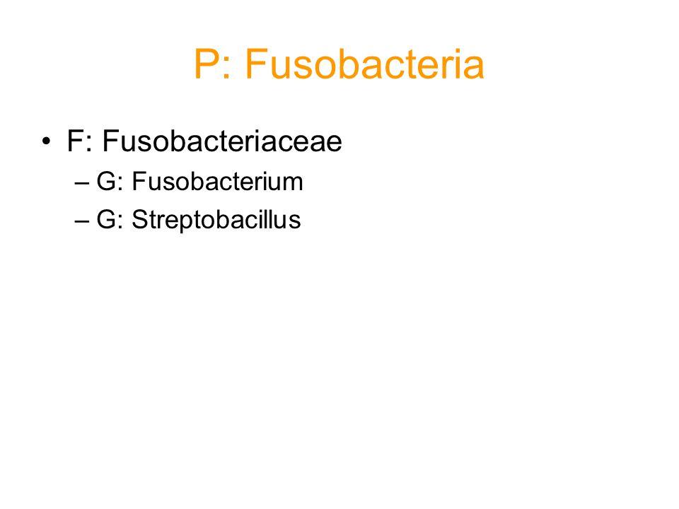 P: Fusobacteria F: Fusobacteriaceae G: Fusobacterium