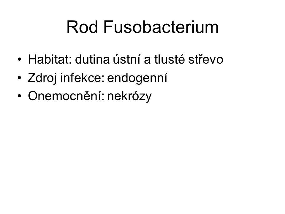 Rod Fusobacterium Habitat: dutina ústní a tlusté střevo