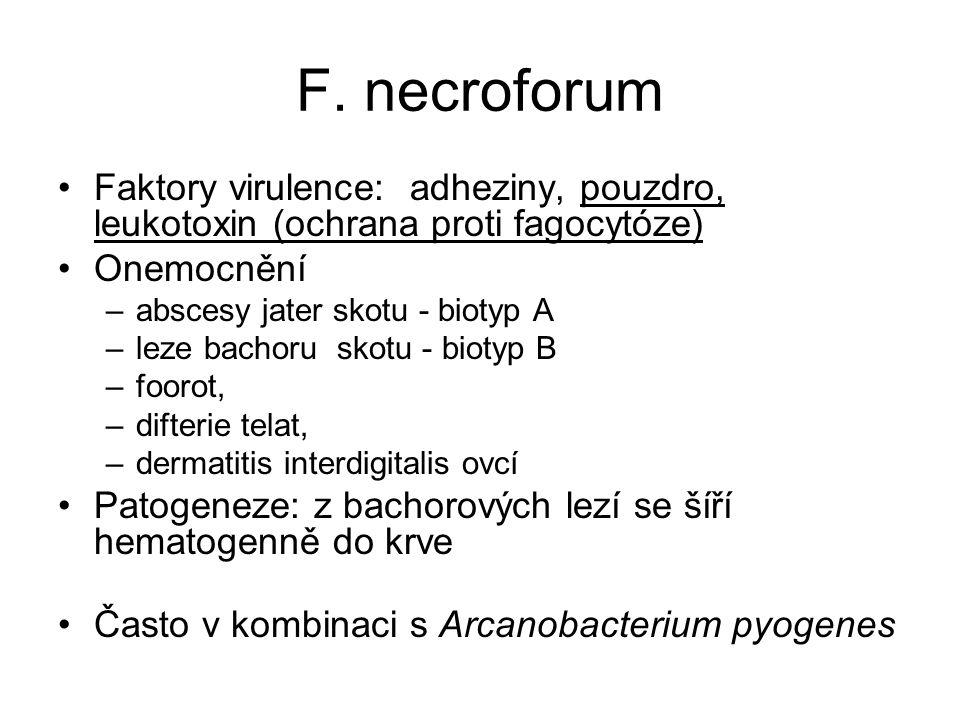 F. necroforum Faktory virulence: adheziny, pouzdro, leukotoxin (ochrana proti fagocytóze) Onemocnění.