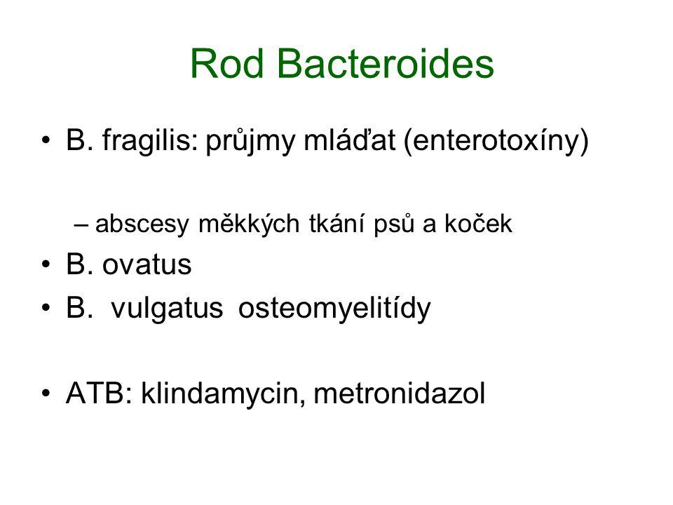 Rod Bacteroides B. fragilis: průjmy mláďat (enterotoxíny) B. ovatus