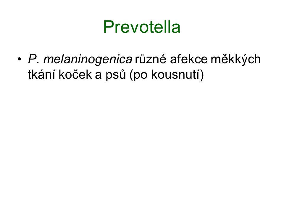Prevotella P. melaninogenica různé afekce měkkých tkání koček a psů (po kousnutí)