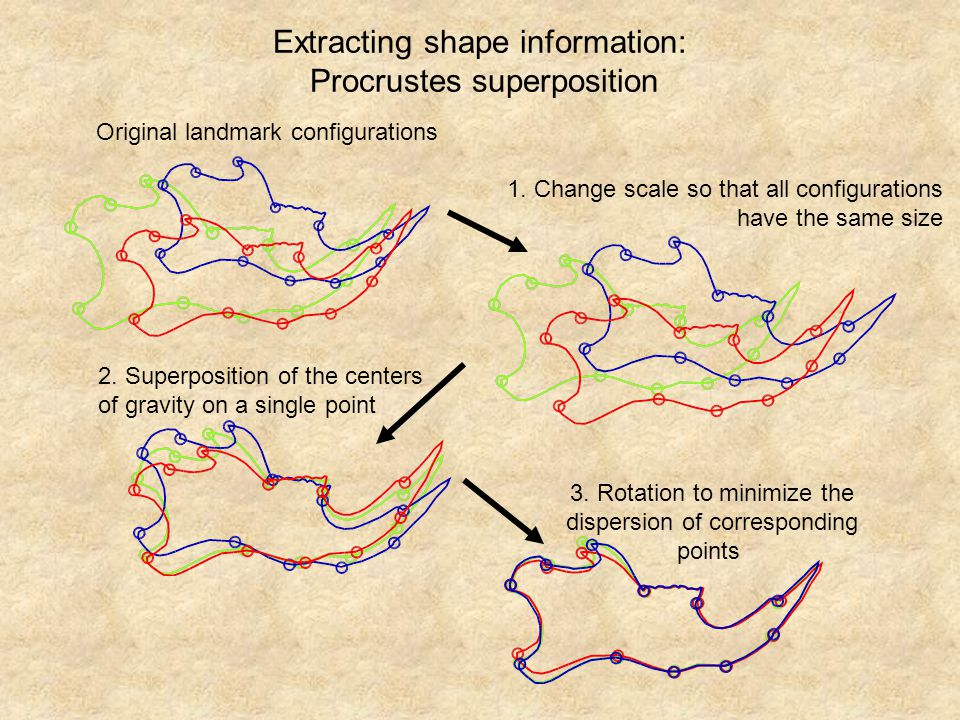 Extracting shape information: Procrustes superposition
