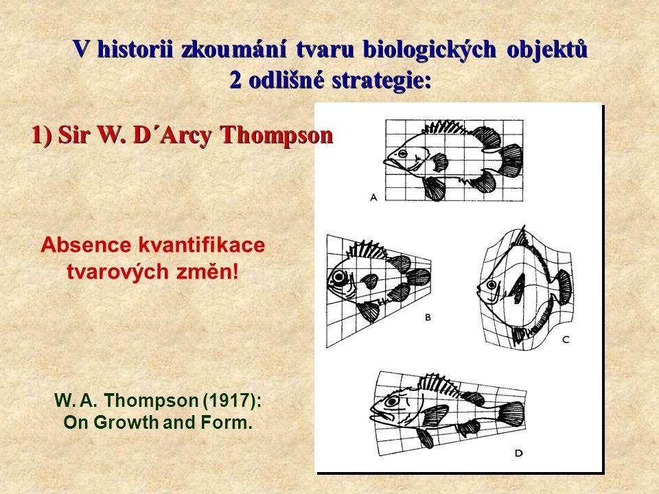 V historii zkoumání tvaru biologických objektů