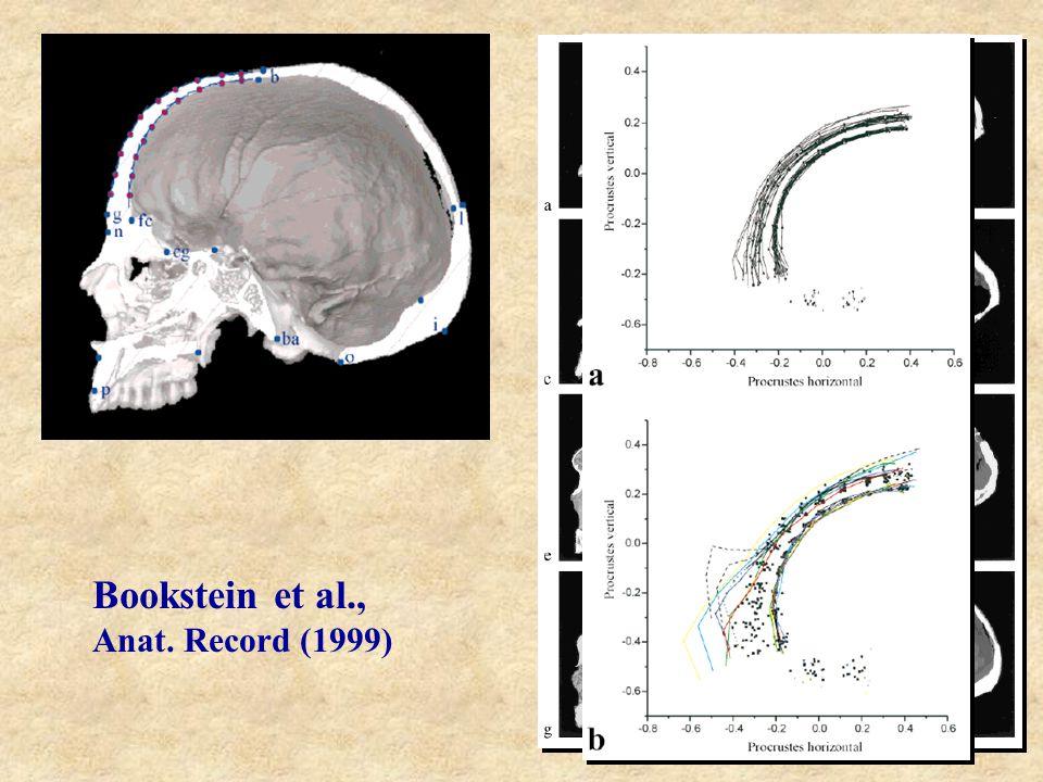 Bookstein et al., Anat. Record (1999)