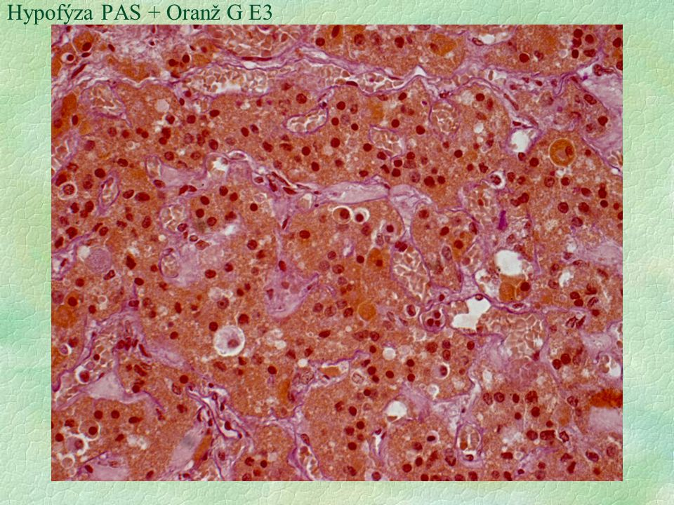 Hypofýza PAS + Oranž G E3