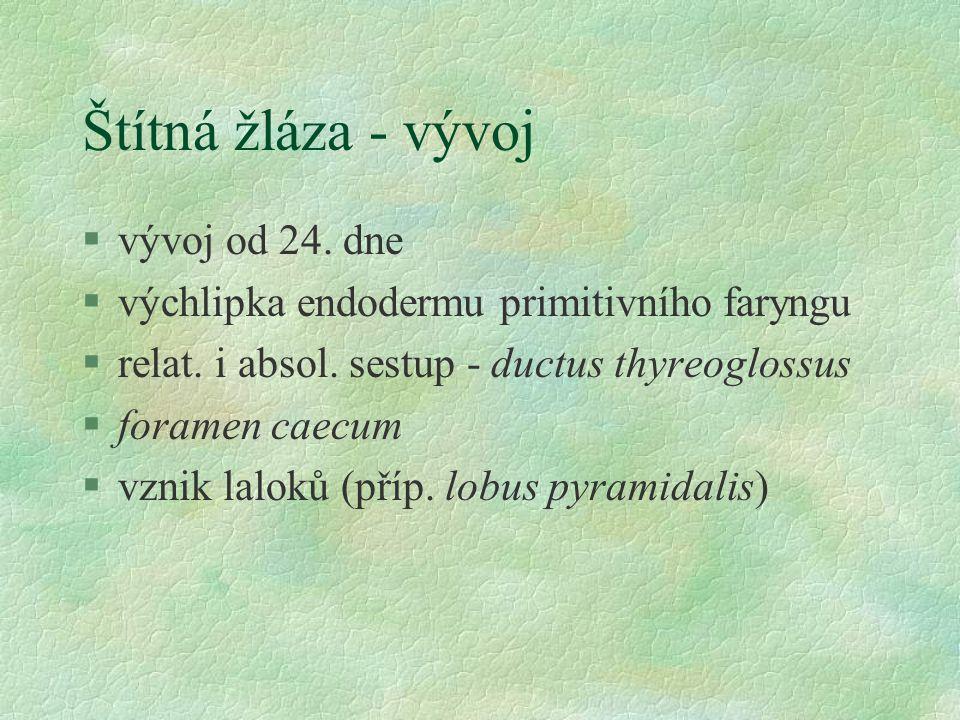 Štítná žláza - vývoj vývoj od 24. dne